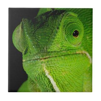 Portrait Of Flap-Necked Chameleon Tile