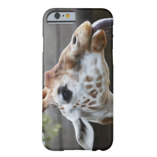 Portrait of Giraffe (Giraffa camelopardalis) Barely There iPhone 6 Case