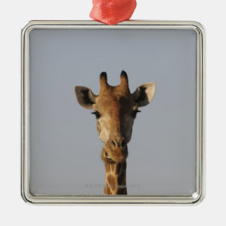 Portrait of Giraffe (Giraffa camelopardalis) Christmas Ornament