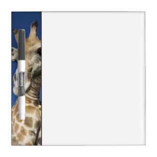Portrait of Giraffe (Giraffa Camelopardalis) Dry Erase Board