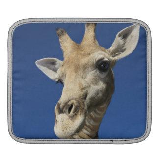 Portrait of Giraffe (Giraffa Camelopardalis) iPad Sleeve