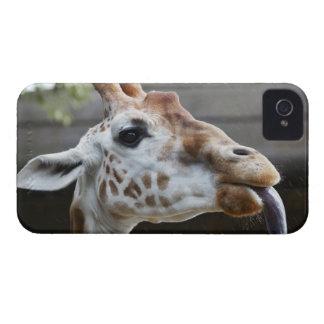 Portrait of Giraffe (Giraffa camelopardalis) iPhone 4 Covers