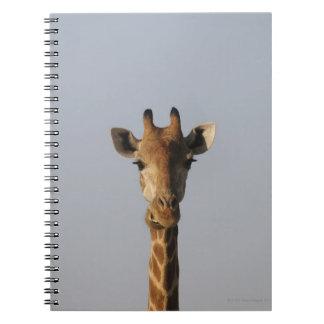 Portrait of Giraffe (Giraffa camelopardalis), Notebook