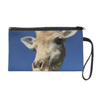 Portrait of Giraffe (Giraffa Camelopardalis) Wristlet