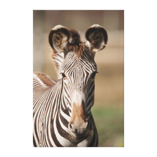Portrait of Grevy's Zebra Canvas Print