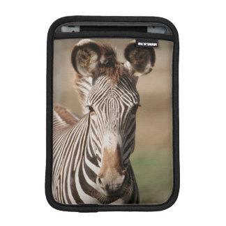 Portrait of Grevy's Zebra iPad Mini Sleeve