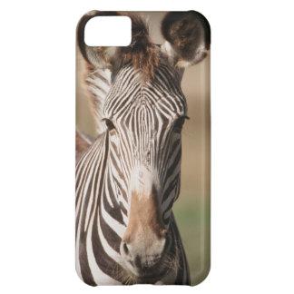 Portrait of Grevy's Zebra iPhone 5C Case