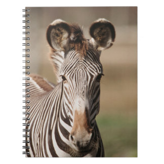 Portrait of Grevy's Zebra Spiral Notebook