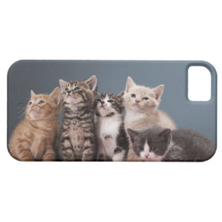 Portrait of group of kittens barely there iPhone 5 case
