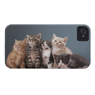 Portrait of group of kittens iPhone 4 case