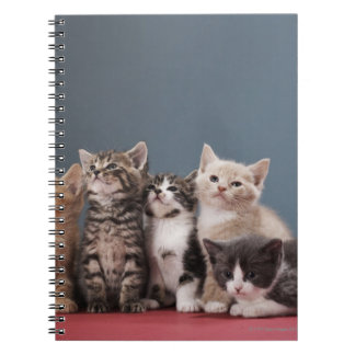 Portrait of group of kittens notebook