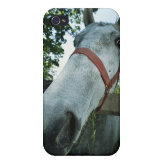 Portrait of Horse Case For The iPhone 4