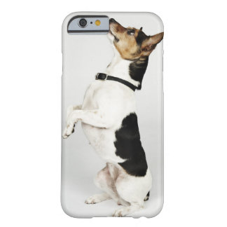 Portrait of Jack Russell dog sitting up on his Barely There iPhone 6 Case