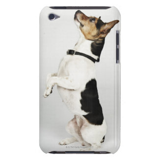 Portrait of Jack Russell dog sitting up on his Barely There iPod Cases