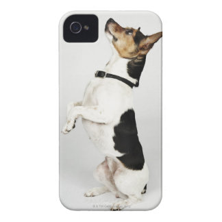 Portrait of Jack Russell dog sitting up on his iPhone 4 Case-Mate Case