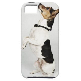Portrait of Jack Russell dog sitting up on his iPhone 5 Cover