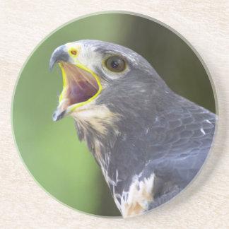 Portrait Of Jackal Buzzard (Buteo Rufofuscus) Coasters