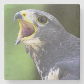 Portrait Of Jackal Buzzard (Buteo Rufofuscus) Stone Coaster