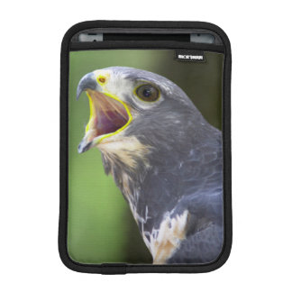 Portrait Of Jackal Buzzard (Buteo Rufofuscus) iPad Mini Sleeve