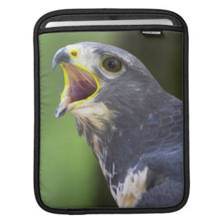 Portrait Of Jackal Buzzard (Buteo Rufofuscus) iPad Sleeve