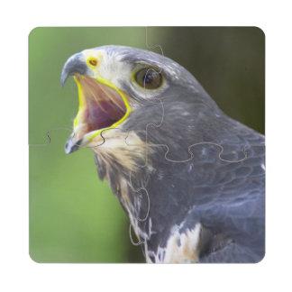 Portrait Of Jackal Buzzard (Buteo Rufofuscus) Puzzle Coaster