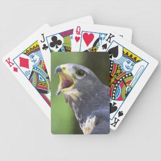 Portrait Of Jackal Buzzard (Buteo Rufofuscus) Poker Cards