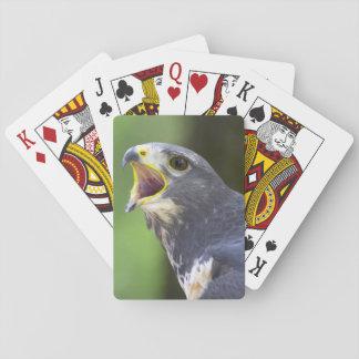 Portrait Of Jackal Buzzard (Buteo Rufofuscus) Playing Cards