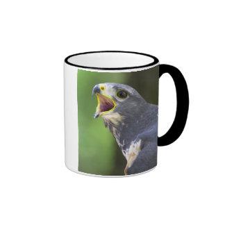 Portrait Of Jackal Buzzard (Buteo Rufofuscus) Ringer Mug