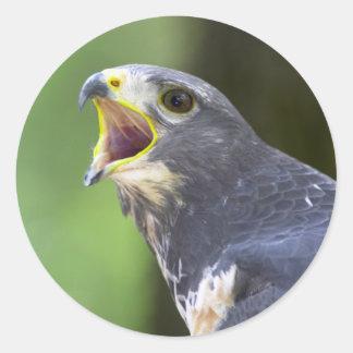 Portrait Of Jackal Buzzard (Buteo Rufofuscus) Round Sticker