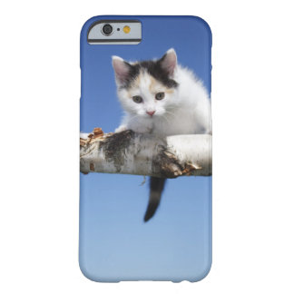 Portrait of Kitten Barely There iPhone 6 Case