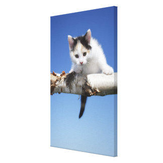 Portrait of Kitten Canvas Print