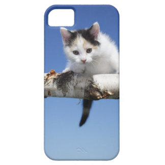 Portrait of Kitten iPhone 5 Cover