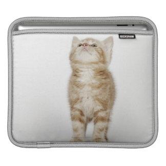 Portrait of kitten looking up iPad sleeve