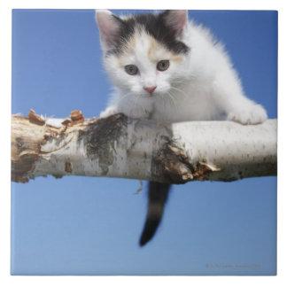 Portrait of Kitten Tile