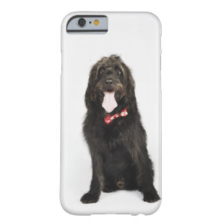 Portrait of Labradoodle dog Barely There iPhone 6 Case