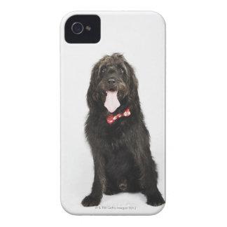 Portrait of Labradoodle dog iPhone 4 Case-Mate Case