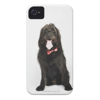 Portrait of Labradoodle dog iPhone 4 Case-Mate Cases