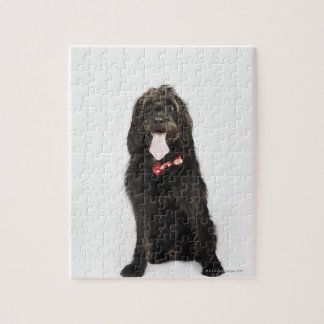 Portrait of Labradoodle dog Jigsaw Puzzle