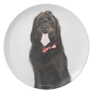 Portrait of Labradoodle dog Plate