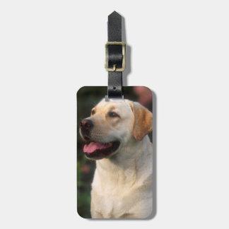 Portrait Of Labrador Retriever, Hilton Luggage Tag