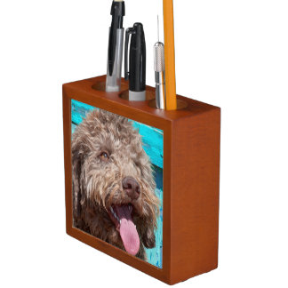 Portrait Of Lagotto Romagnolo In Front Of Blue Desk Organiser