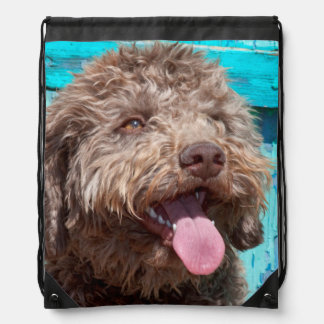 Portrait Of Lagotto Romagnolo In Front Of Blue Drawstring Bag