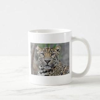 Portrait of Leopard Coffee Mugs