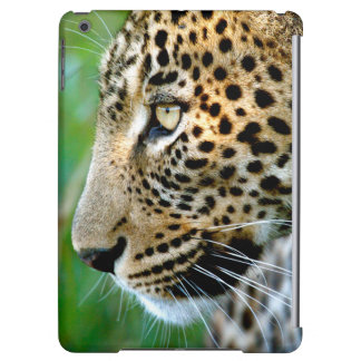 Portrait Of Leopard (Panthera Pardus)