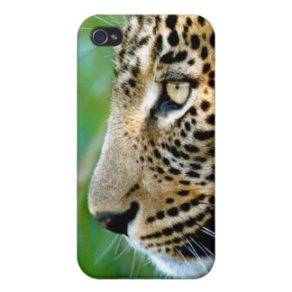 Portrait Of Leopard (Panthera Pardus) Case For The iPhone 4