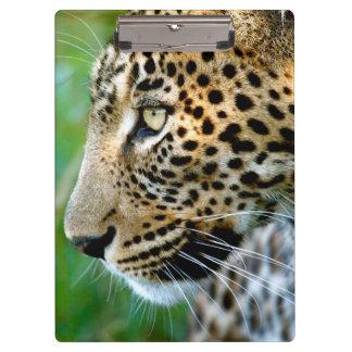 Portrait Of Leopard (Panthera Pardus) Clipboard