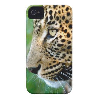 Portrait Of Leopard (Panthera Pardus) iPhone 4 Case
