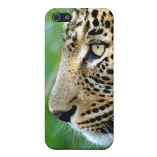 Portrait Of Leopard (Panthera Pardus) iPhone 5 Cases
