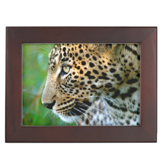 Portrait Of Leopard (Panthera Pardus) Keepsake Box