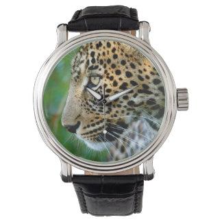 Portrait Of Leopard (Panthera Pardus) Watch